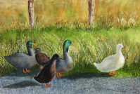 Ducks at Richmond Tasmania from photo by T. Corthorne 2015: Watercolour: 81 x 41 cm framed: Price $425.
