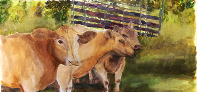 Pregnant Cows, 2015 from photograh by T. Corthorne: Watercolour: SOLD.