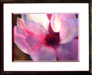 Soft pink Magnolia: Pastel from a photo: 76 x 61 cm framed; Price $425